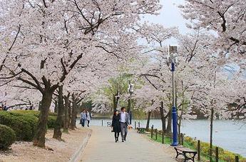เที่ยวเกาหลีสัมผัสฤดูใบไม้ผลิ